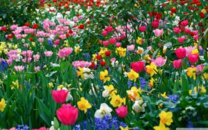 pictures-of-spring-flowers-11