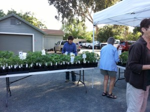 Nursery and Plant Sales